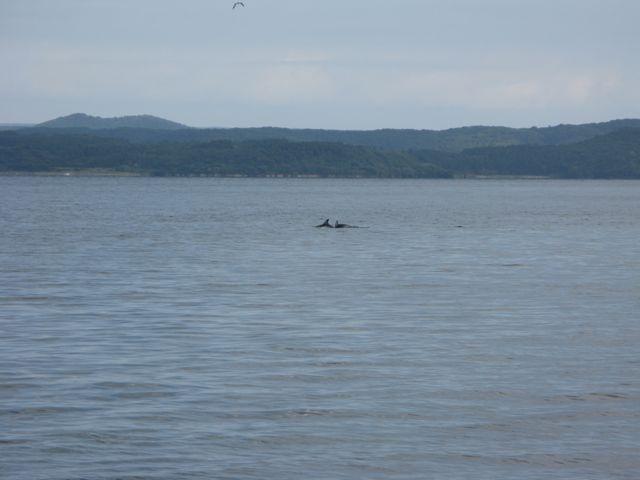 能登島のイルカ